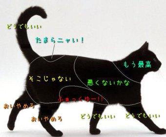 猫カフェで猫の性感帯を刺激して楽しむ方法