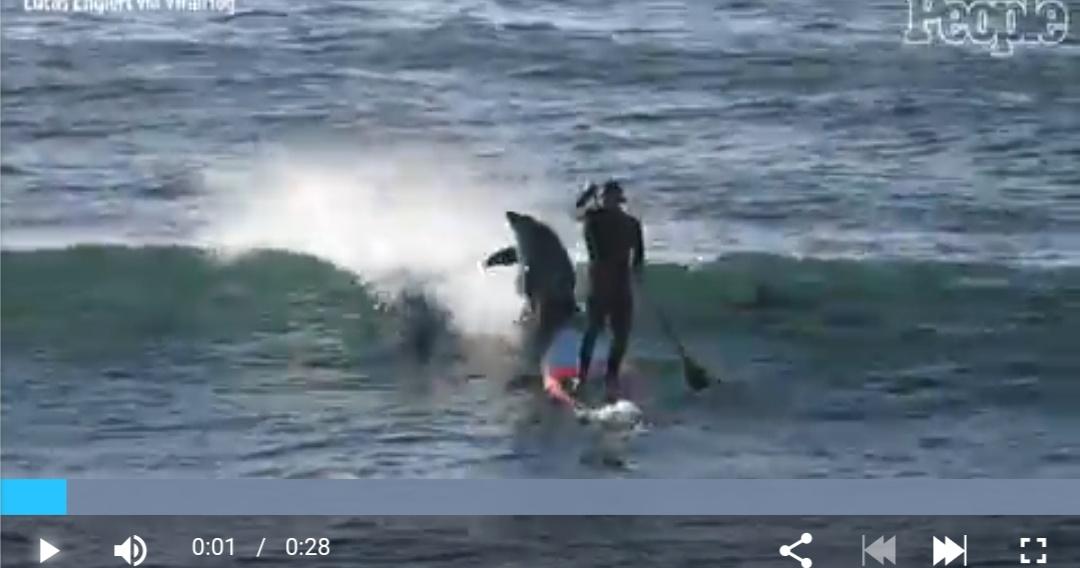 オーストラリア在住の男さん、イルカさんに突進される