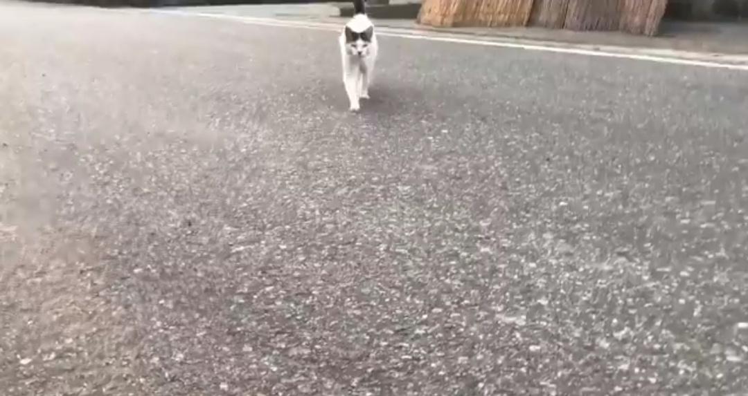 ノーブレーキで突っ込んでくる猫が可愛すぎると話題に
