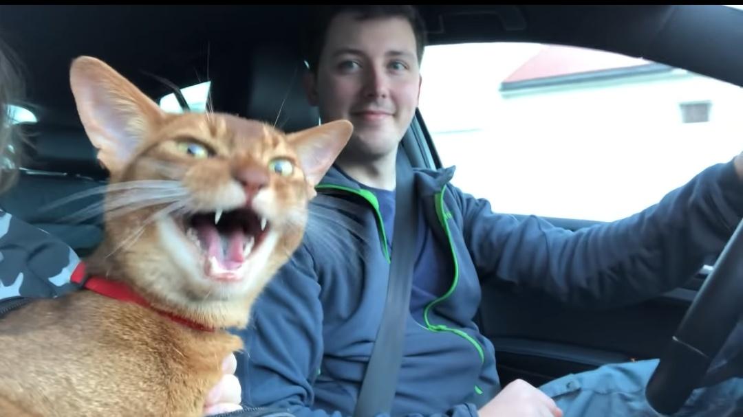 歌に参加したくてしょうがないノルウェーの猫が可愛すぎると話題に