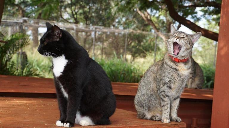 名前を呼ばれても知らん顔の猫さん分かっていて無視しているのかを検証実験で判明ww