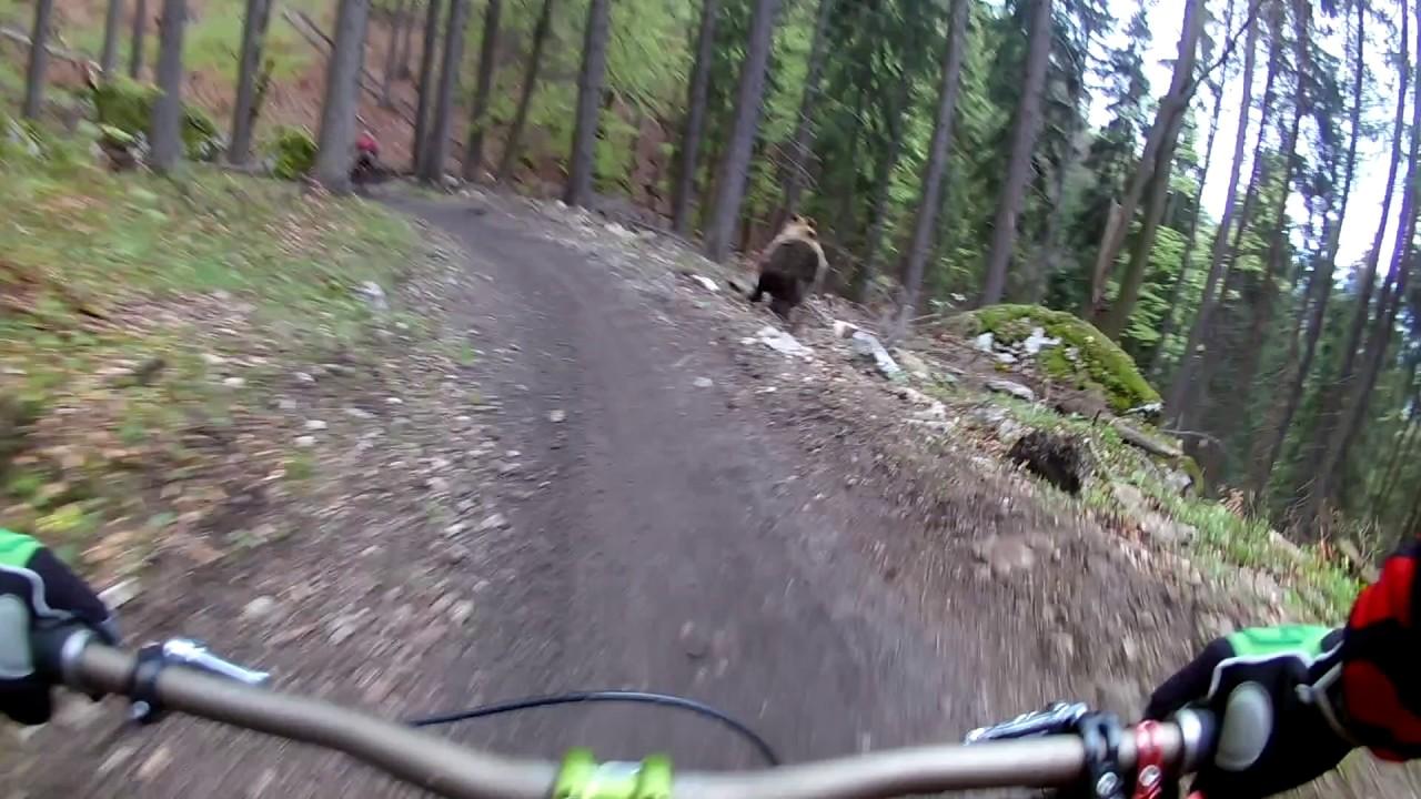 楽しいサイクリングを満喫していた2人、山中走行中に熊に襲われかける映像😲😲😲
